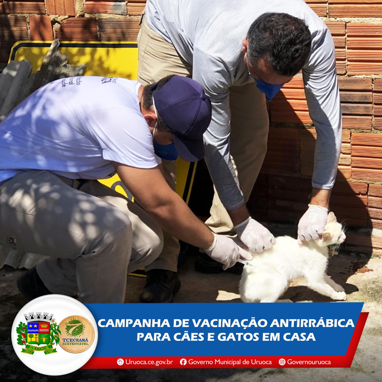 CAMPANHA DE VACINAÇÃO ANTIRRÁBICA PARA CÃES E GATOS EM CASA